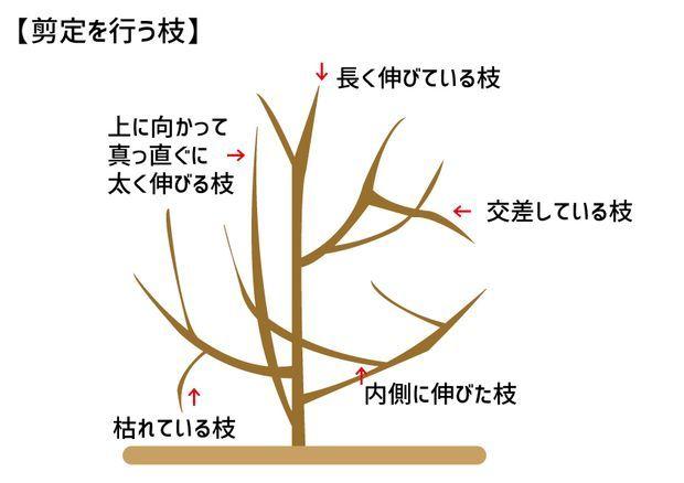 木 梅 の 剪定 の